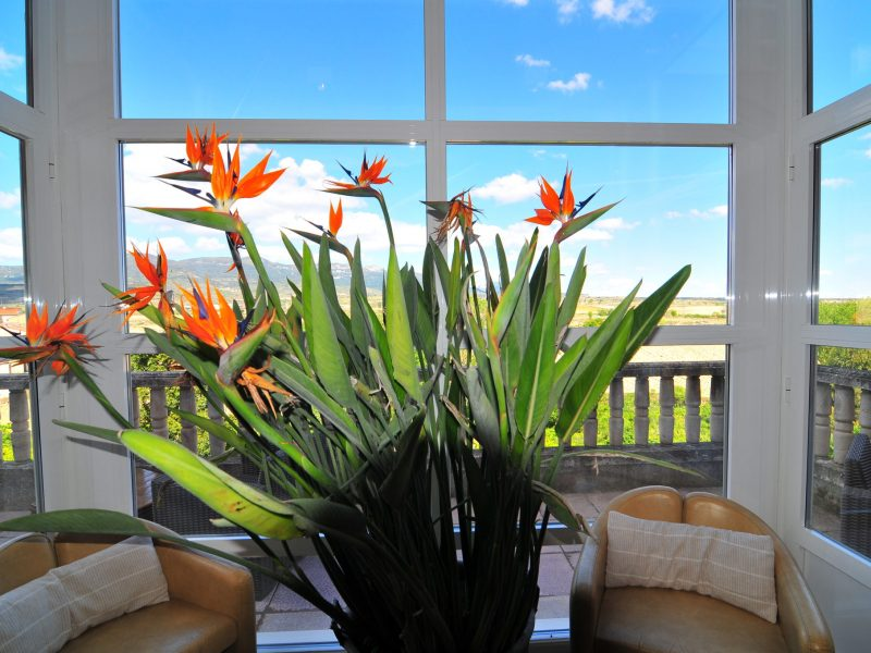 flores sobre la mesa frente a un ventanal